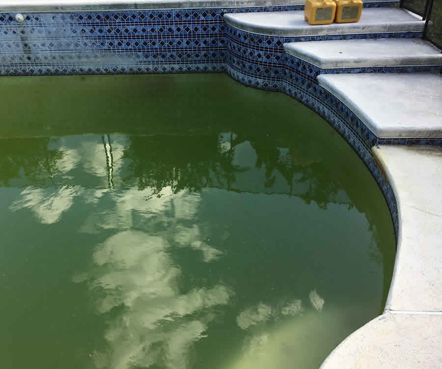 Nasty green pool that needs to be cleaned